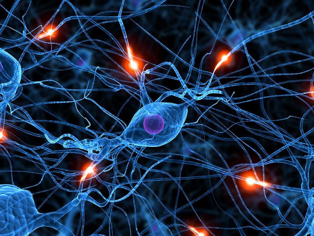 neuronas-academia-goma